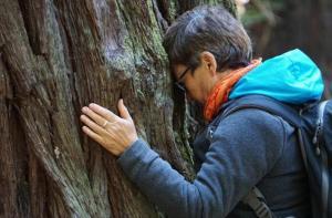 Человек получал энергию от деревьев