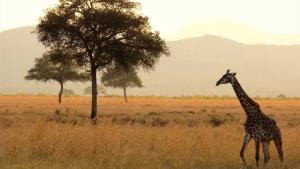 Помогите найти песню! Африканские мотивы. В видео на 44ой секунде.